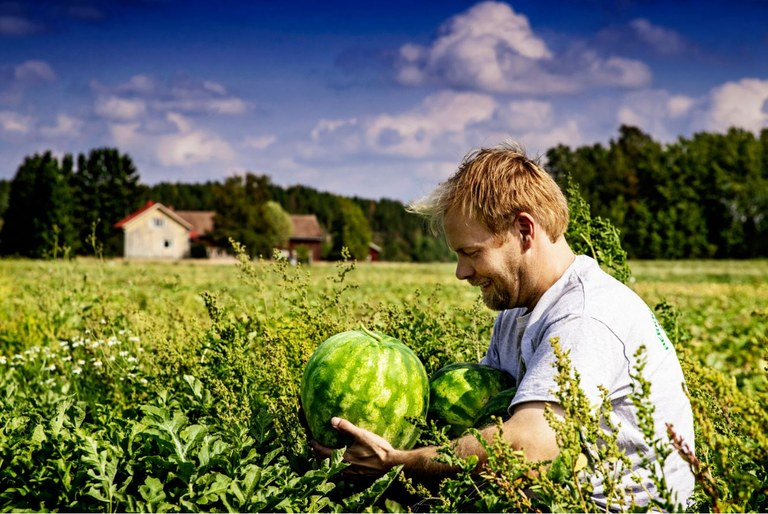 Water melon farmer