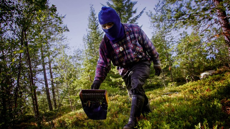 Labour shortage for Nordic agriculture and forestry